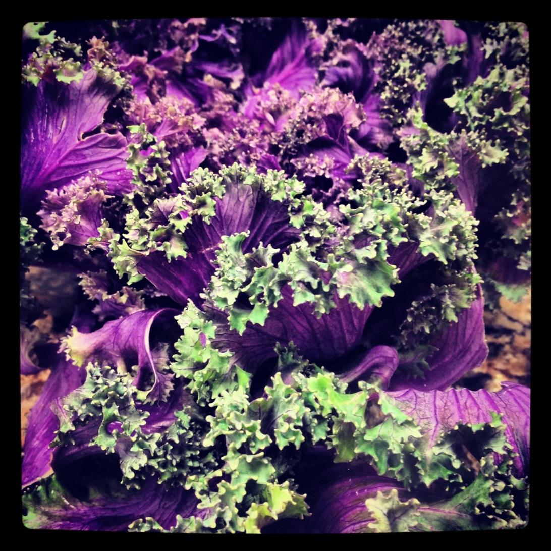 TP Kale Photo